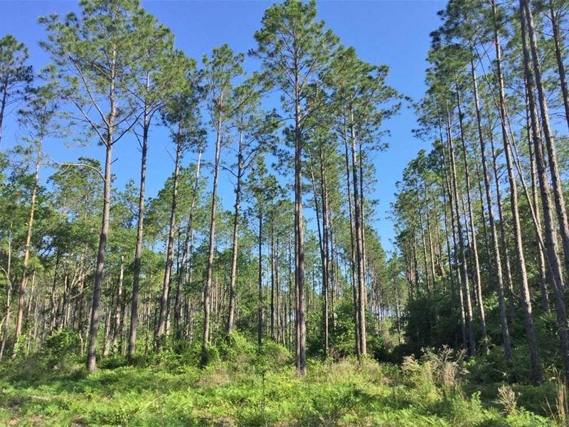 State Route 20 Tract : Ponce De Leon : Walton County : Florida