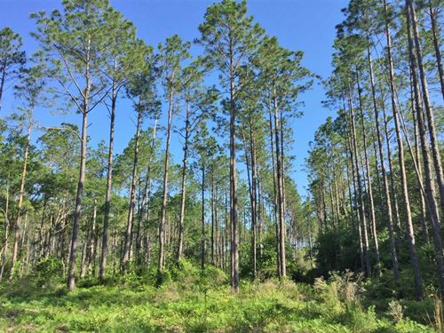 State Route 20 Tract : Ponce De Leon : Walton County : Florida