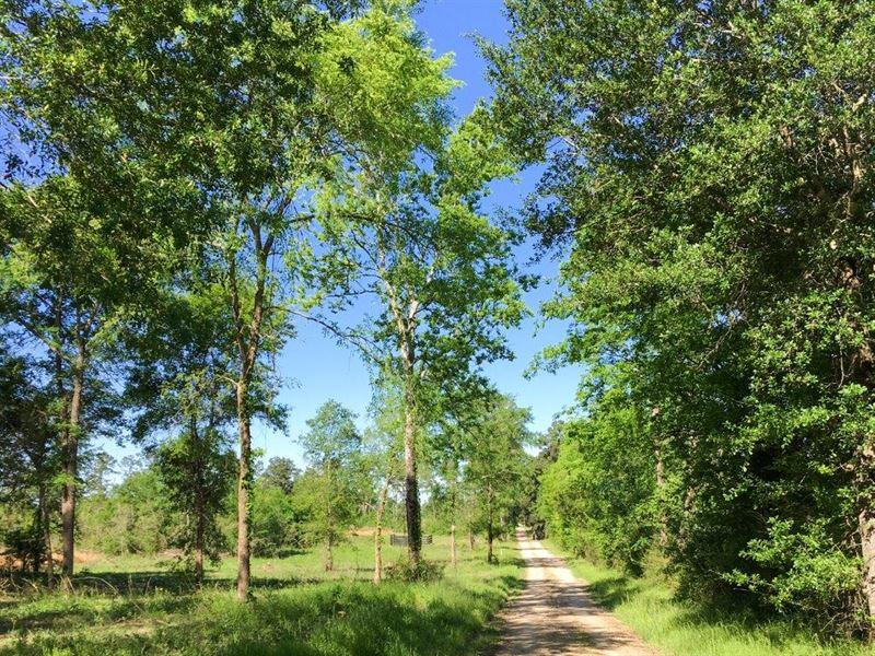 23.15 Acres Rustic Fm 2989 : Huntsville : Walker County : Texas