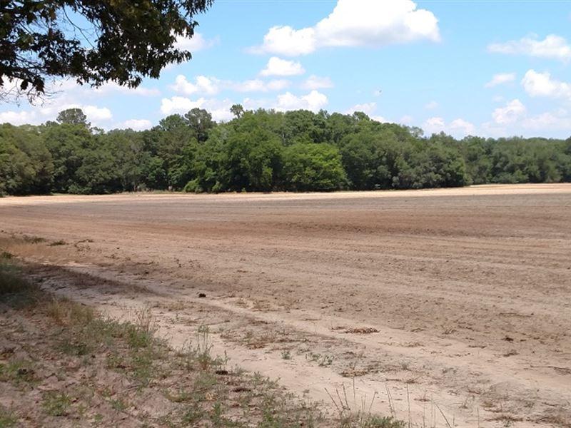 Swga Irrigated Farm--May Divide : Arlington : Early County : Georgia