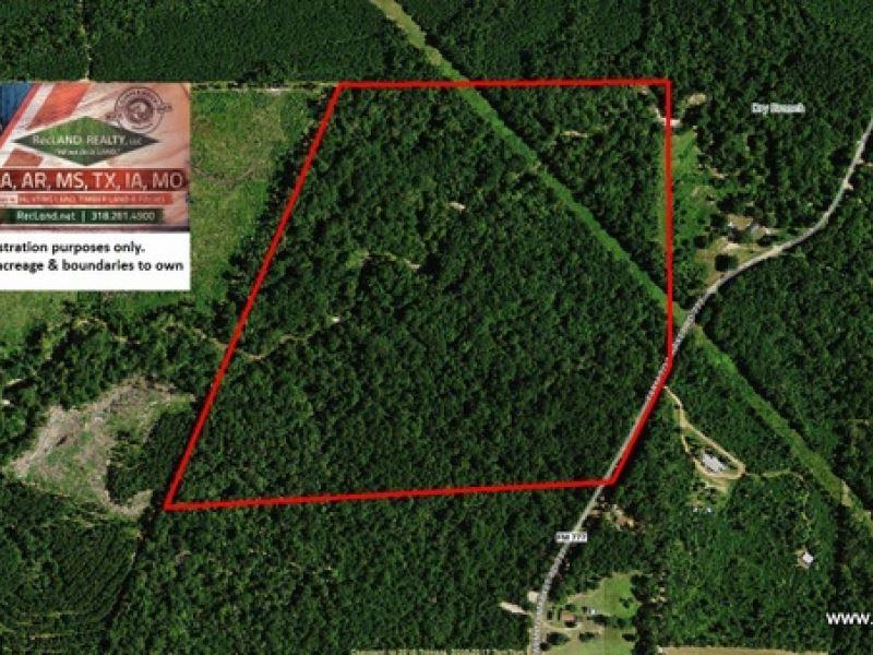 75 Ac Pretty Timberland Tract For : Jasper : Jasper County : Texas