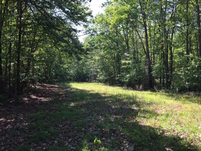 23.9+/-Acres Wooded Mature Hardwood : Sewanee : Marion County : Tennessee