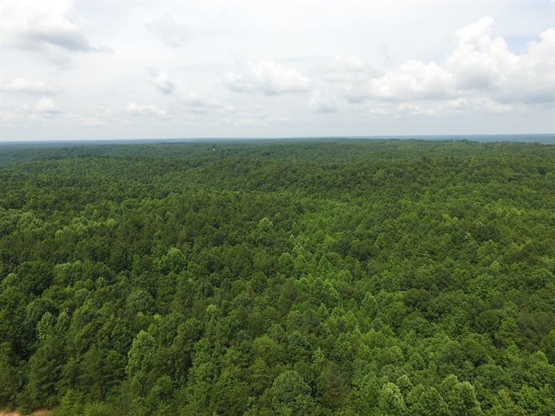 174 Wooded Acres : Linden : Perry County : Tennessee
