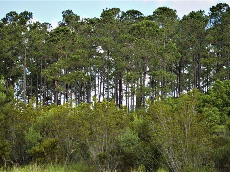 Island Flats Tract : Green Pond : Colleton County : South Carolina