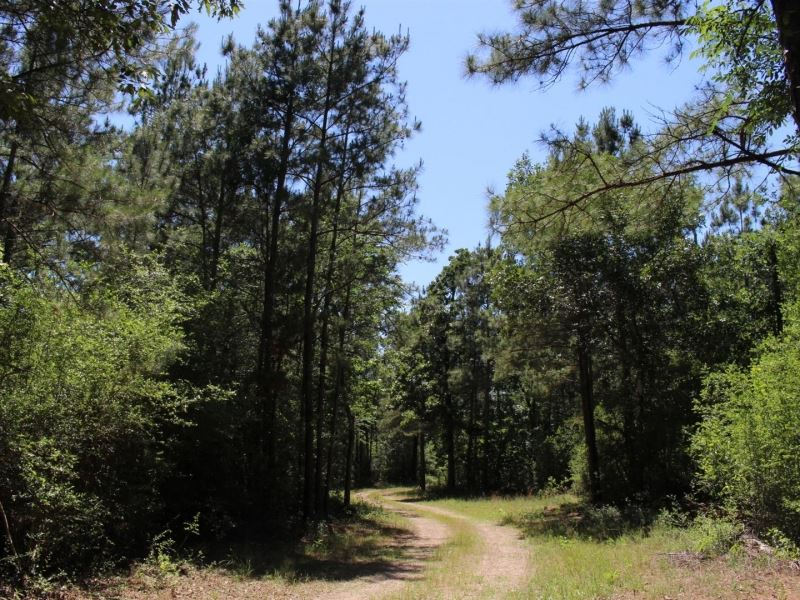 Forest Trails : Montgomery : Montgomery County : Texas