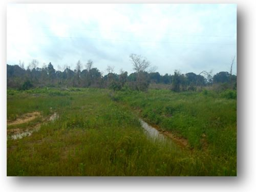 214 Acres In Newton County : Decatur : Newton County : Mississippi