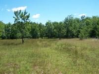 166 Acres Dickey Loop : Bedias : Walker County : Texas
