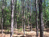 Timberland Investment Tract : Rayle : Wilkes County : Georgia