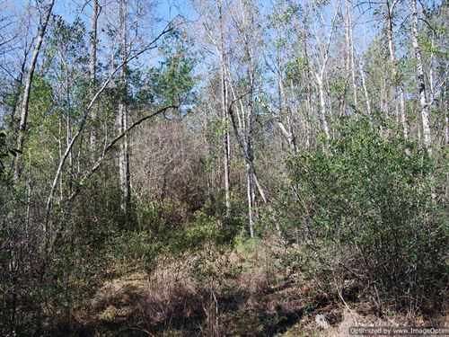 12+/- Acres : Poplarville : Pearl River County : Mississippi