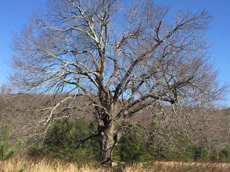 For Sale 76 Acres In Floyd County : Floyd : Floyd County : Virginia