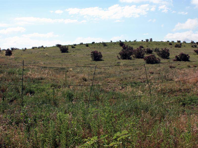 Open Range : Florence : Fremont County : Colorado