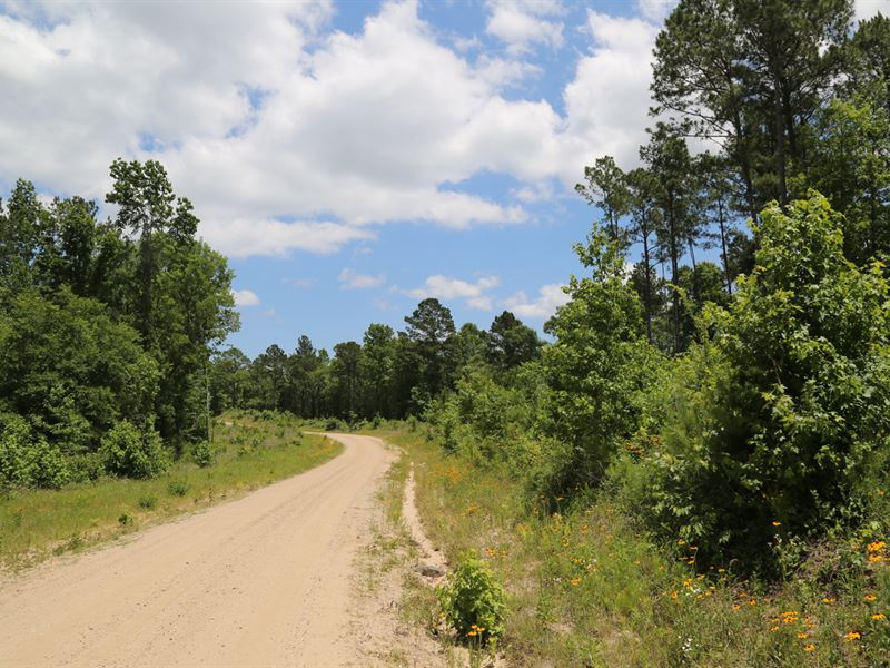 24.2 Acres Felix Currie Road : Point Blank : San Jacinto County : Texas