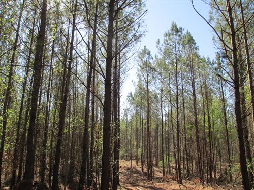 140+/- Ac Hunting, Farm Near Auburn : Lafayette : Chambers County : Alabama