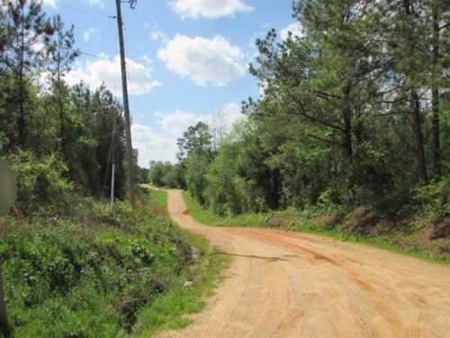 40 Acres Of Timberland For Sale : Louin : Jasper County : Mississippi