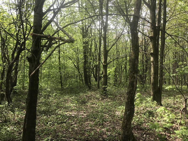 Winona Woodlands : Boylston : Oswego County : New York
