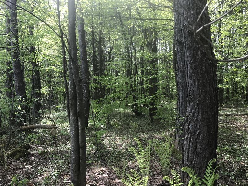 Pinetree Woodlands : Boylston : Oswego County : New York