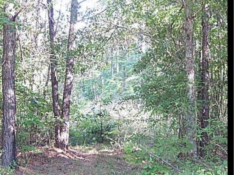 40 Acres In Scott County : Forest : Scott County : Mississippi