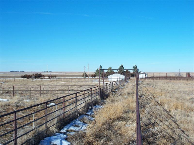 Sidney Cattle Facility : Sidney : Cheyenne County : Nebraska