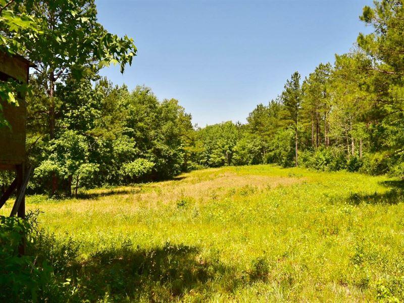 Pike County 497 Acres +/- : Troy : Pike County : Alabama