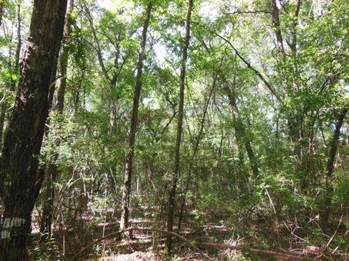 52 Ac Close To Ichetucknee Springs : Fort White : Columbia County : Florida