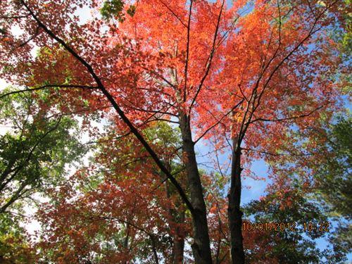 22 Versatile Acres : Montague : Muskegon County : Michigan