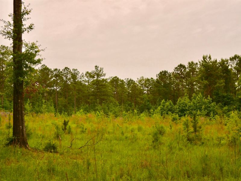 Greenville, Al 92 Acres +/- : Greenville : Butler County : Alabama