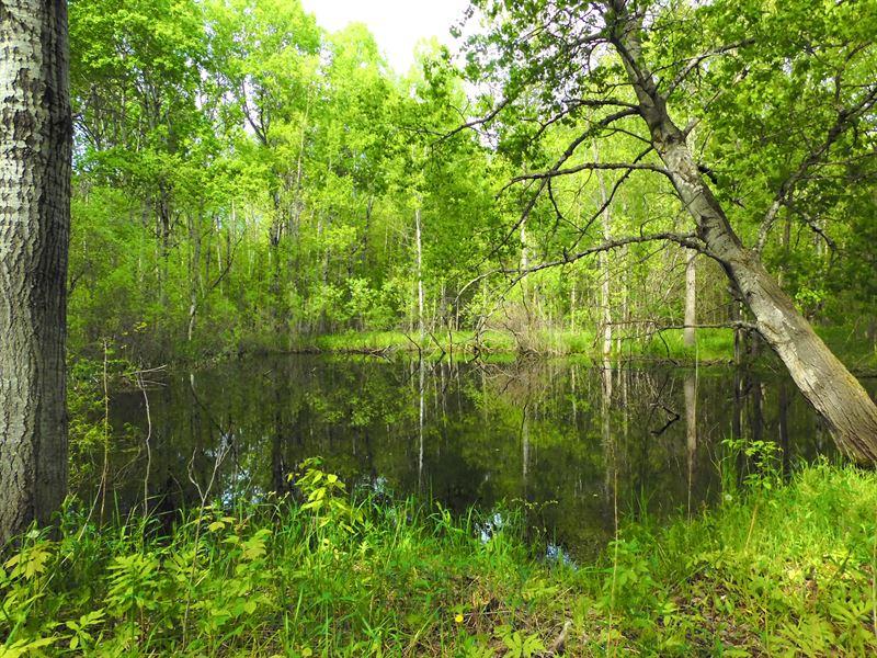 40 Huntable Acres : Moorestown : Missaukee County : Michigan
