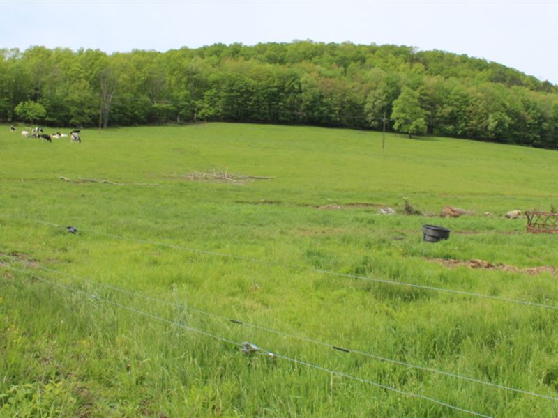 28 Acres Organic Farmland In Ny : Danby : Tompkins County : New York
