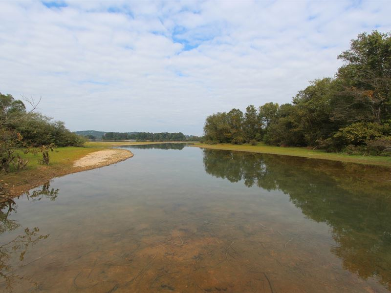 193 Ac,Tn River Wetland Shore, Roan : Lobelville : Perry County : Tennessee