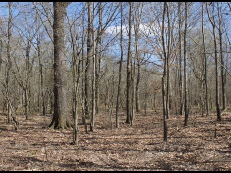 238 Acres In Noxubee County : Shuqualak : Noxubee County : Mississippi