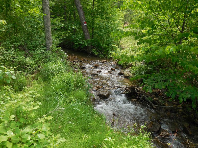 156 Acres With Steams And Springs : Yellow Spring : Hampshire County : West Virginia