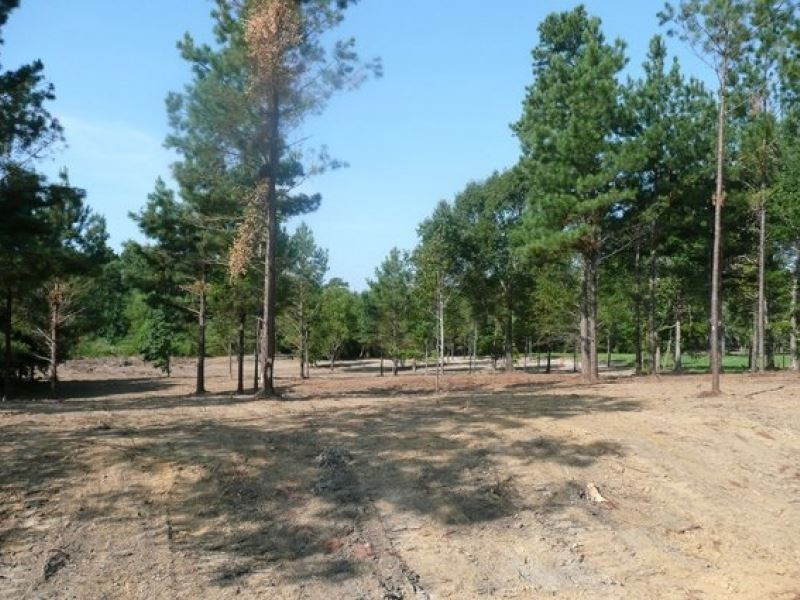 26.7 Acres In Rankin County : Florence : Rankin County : Mississippi