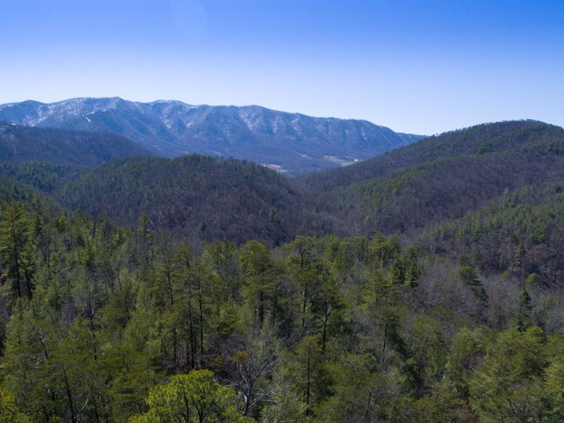 638 Acres Bordering National Park : Townsend : Blount County : Tennessee
