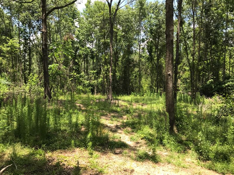 29+ Acres In Sumter County, Sc : Sumter : Sumter County : South Carolina