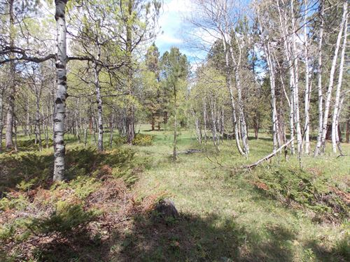 160 Acres Bordering State,Nfs Lands : Sundance : Crook County : Wyoming