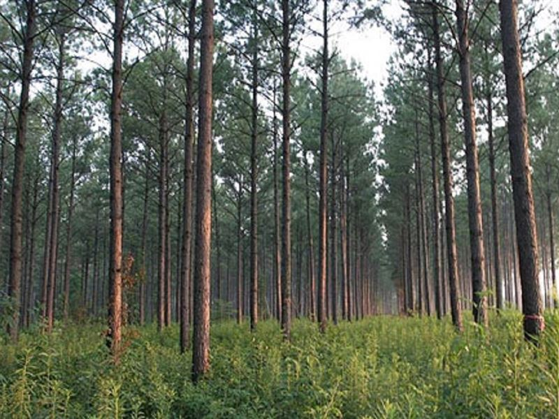 Timber Investment : Bainbridge : Decatur County : Georgia