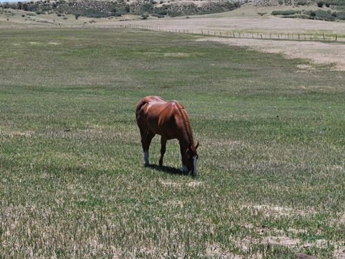 Colorado Horse Lover's Dream : Colorado City : Pueblo County : Colorado