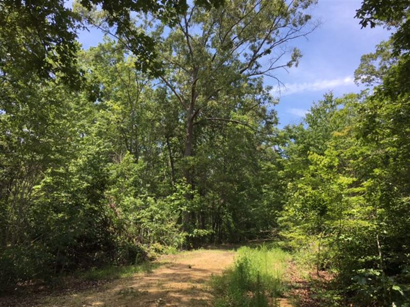 64.762 Acres Orchard Hill : Summerville : Chattooga County : Georgia