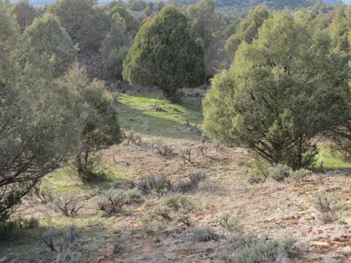 Pinon Hills Ranch - Lot 6 : Pagosa Springs : Archuleta County : Colorado