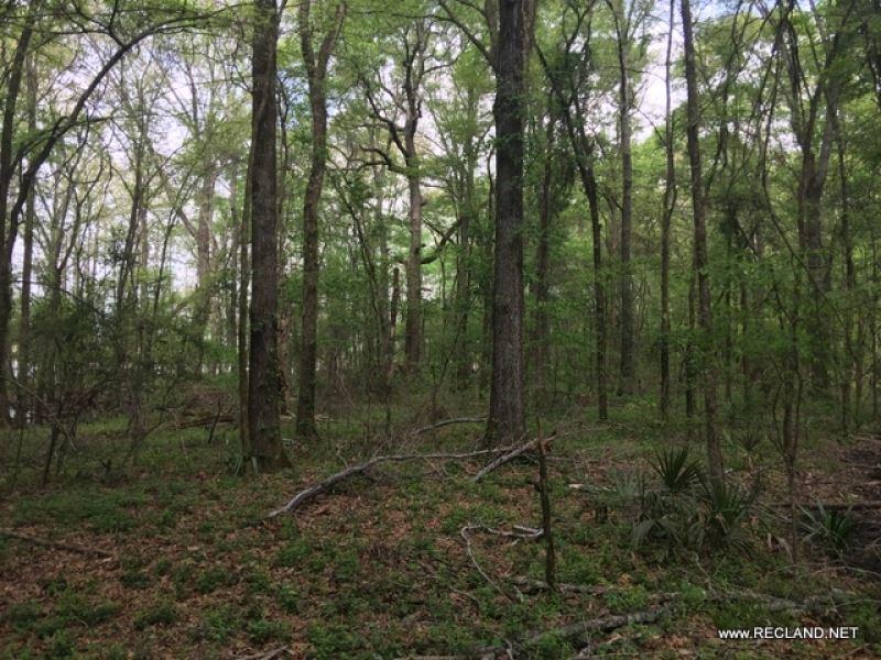 45 Ac - Hardwood Timberland Hunting : Mer Rouge : Morehouse Parish : Louisiana