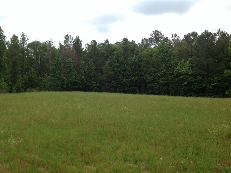 587 Acres Of Timberland : Livingston : Sumter County : Alabama