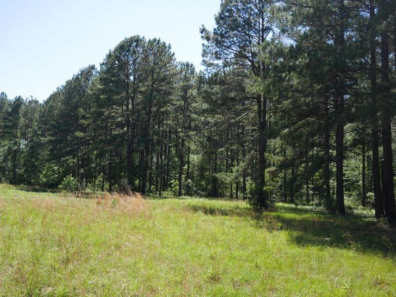 Ash Branch Farm : Pembroke : Bulloch County : Georgia