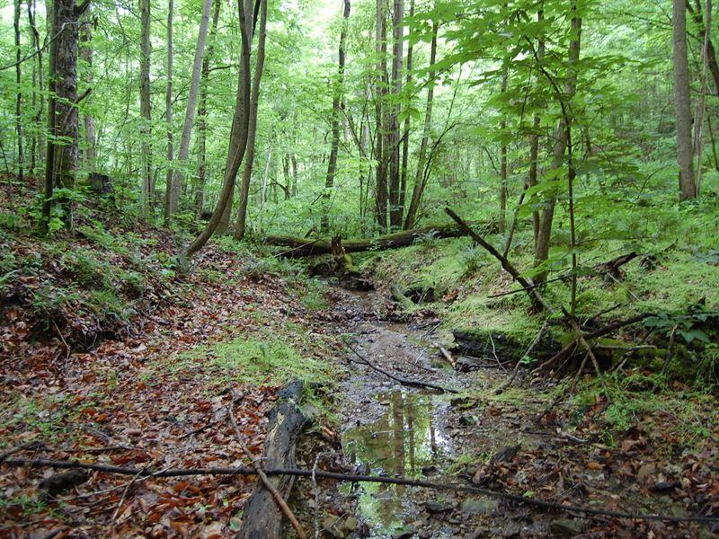 Marabel Rd - 33 Acres : Crown City : Gallia County : Ohio