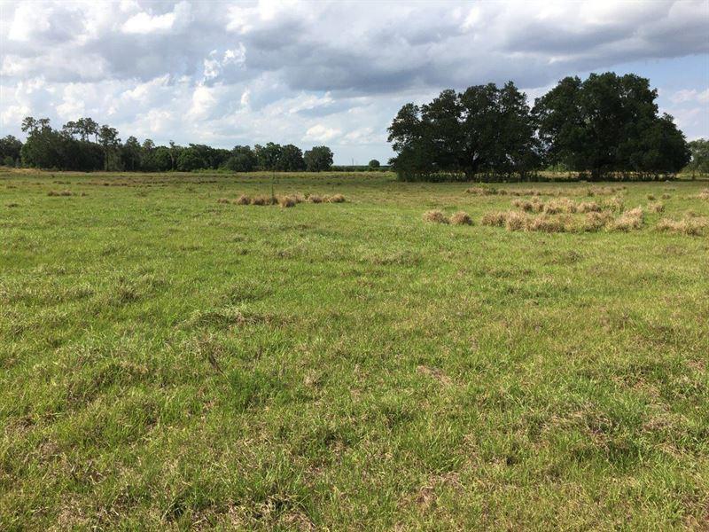 Wauchula Pasture : Wauchula : Hardee County : Florida