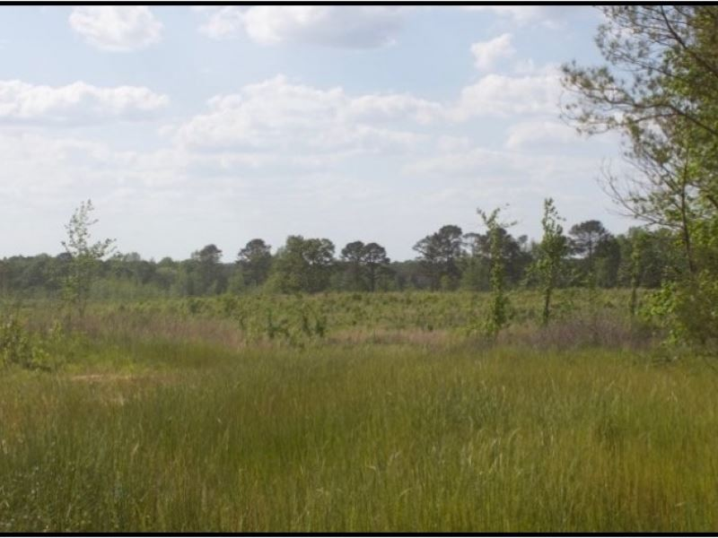 114 Acres In Winston County : Louisville : Winston County : Mississippi