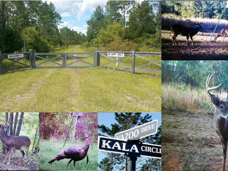 Great Hunting, Fishing & Trails : Crawfordville : Wakulla County : Florida