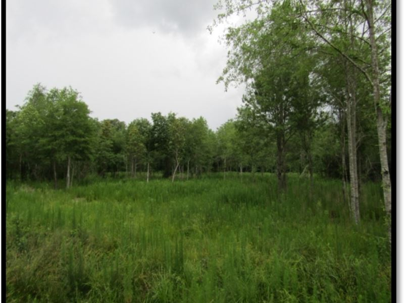 80 Acres In Simpson County : Mendenhall : Simpson County : Mississippi