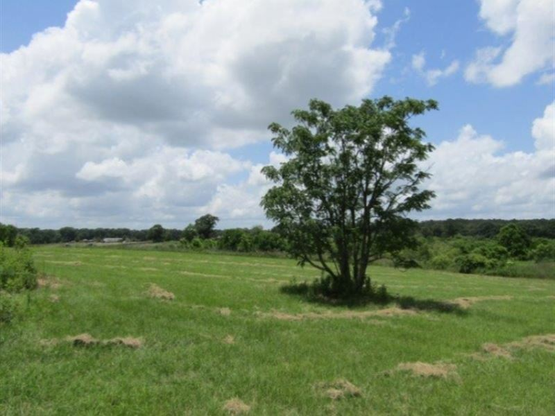 12 Acres In Pike County : McComb : Pike County : Mississippi