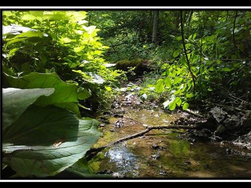 Beautiful 20 Acre Wooded Tract : Thronville : Licking County : Ohio