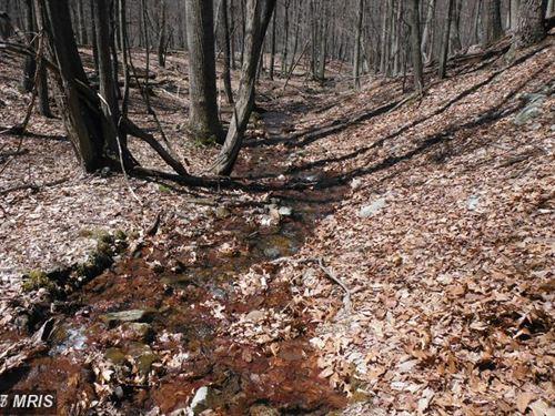 Mountain Stream : Baker : Hardy County : West Virginia